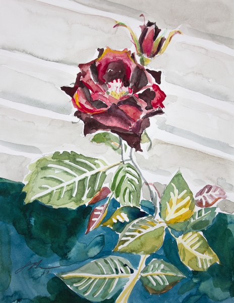 Rose on Wall Fine Art Print