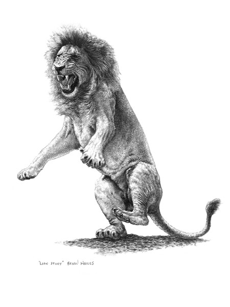 Lion drawing art print