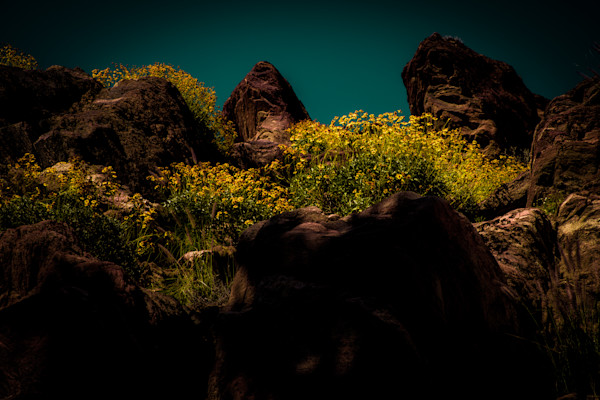 Dance Of The Daisies Photograph For Sale as Fine Art