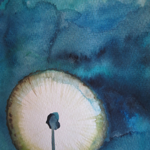 Dark Dandelion watercolor for sale $200 boudreau-art