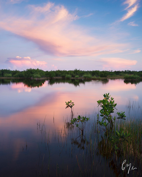 Constance Mier Photography - Florida wetland waterscape