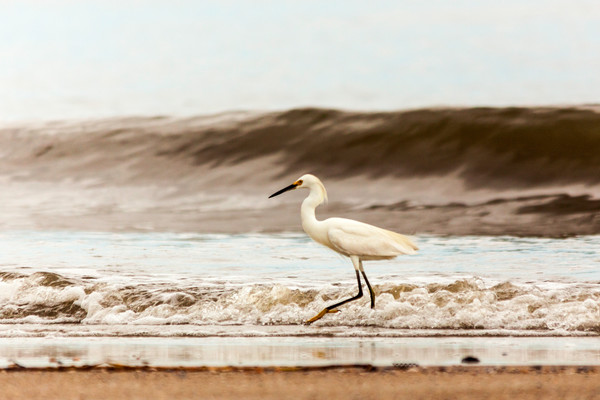 Coastal Georgia Wildlife photographs