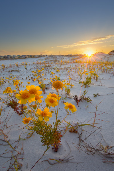 New Releases of Florida's Emerald Coast Photographs - Fine Art Prints on Canvas, Paper, Metal, & More
