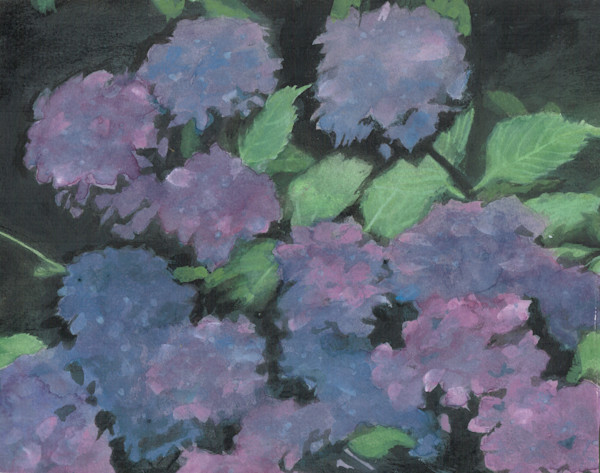 Hydrangeas from 1993