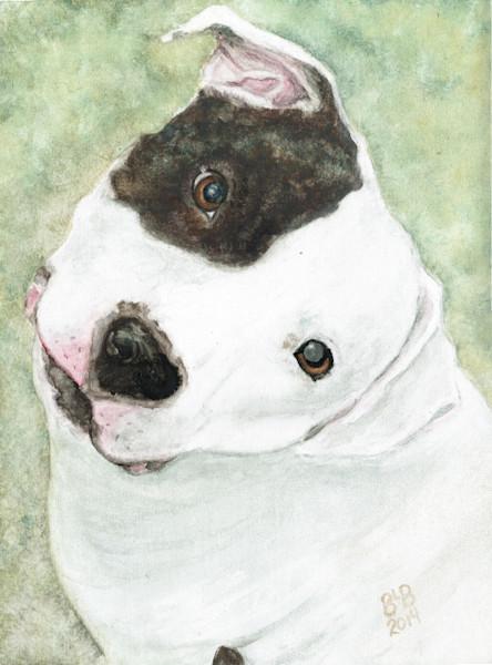 Minnie Precious Pit Bull