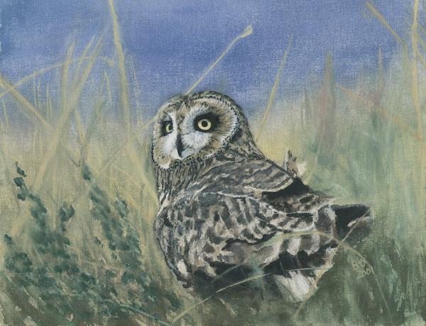 Owl Alert Eyes