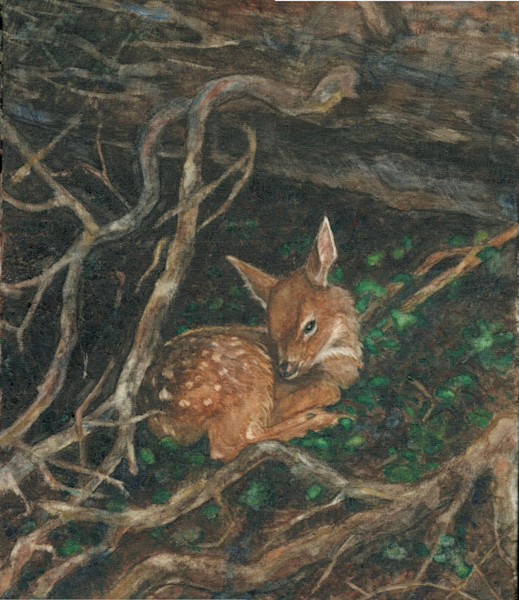 Fawn Scanned