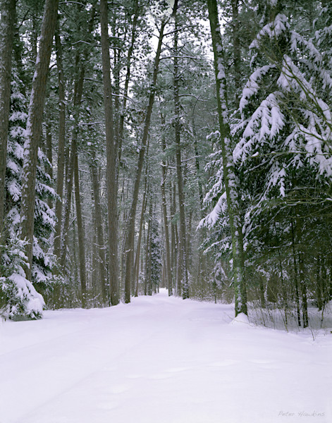 wilderness drive,  itasca state park, minnesota, winter, snow