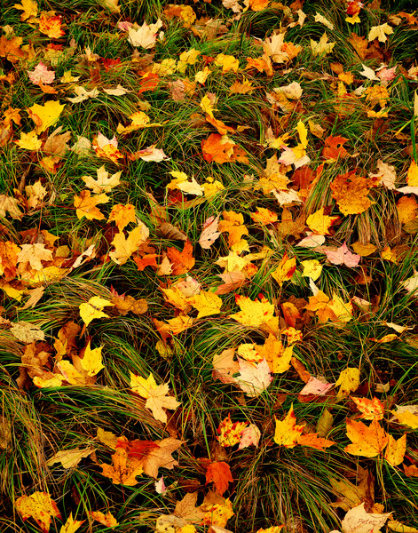Fall Forest Floor in Itasca state park