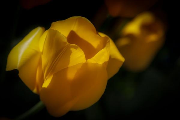 Yellow Solitare