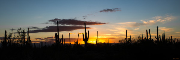 saguaro, sunset,  summer, tucson, arizona