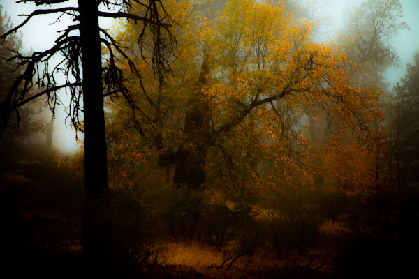 Autumn Glow Photograph For Sale as Fine Art