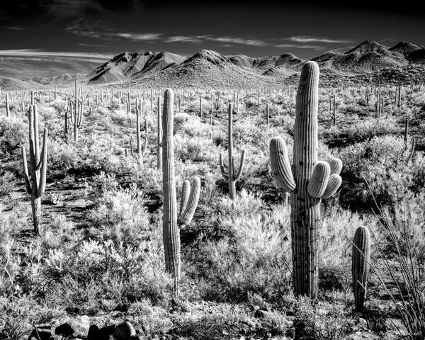 desert view, saguaro national park, tucson, black and white, arizona