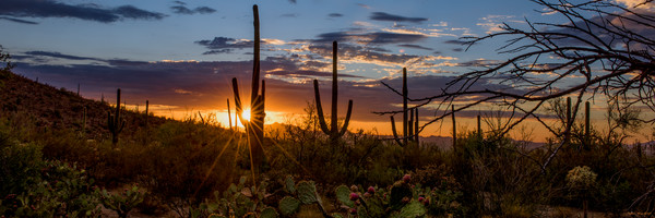 summer, sunset, saguaro national park, tucson, arizona