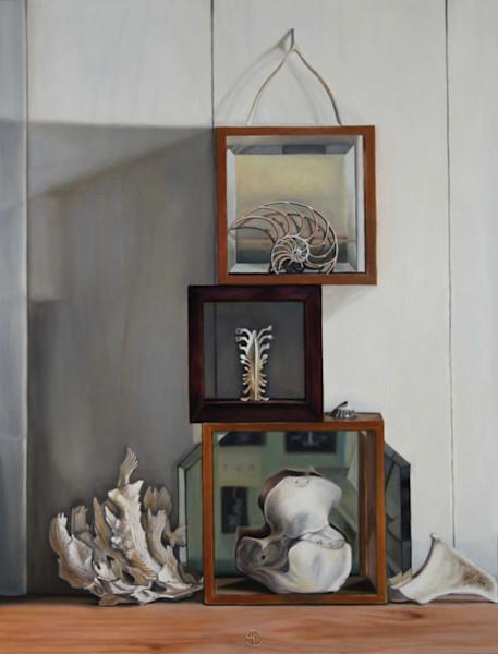 Reflection of Structures, Bones, Vertebrae, Coral Shells