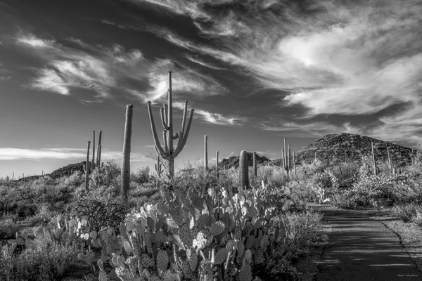 discovery trail, black and white, saguaro national park, arizona, tucson