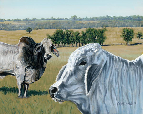 Original painting of Brahman cattle and Texas landscape for sale as art prints.