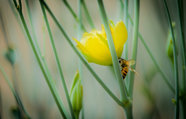 What's All The Buzz? Photograph For Sale as Fine Art