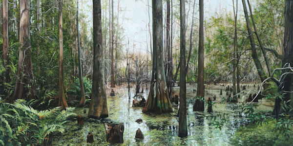 Lush Florida cypress swamp print | Kevin Grass Fine Art