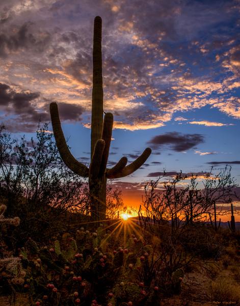 USA, Arizona, Tucson, Saguaro National Park, Tucson Mountian District