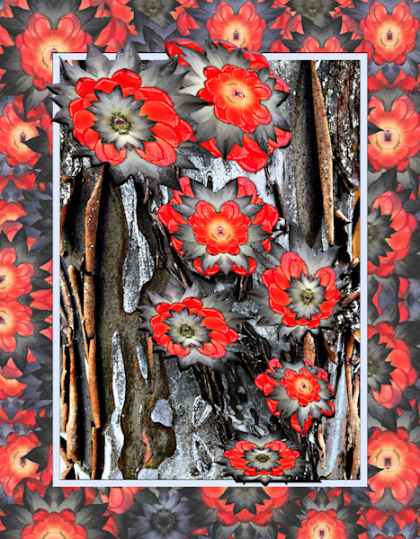 wildflower photographs transformed into abstract digital art for sale by Maureen Wilks