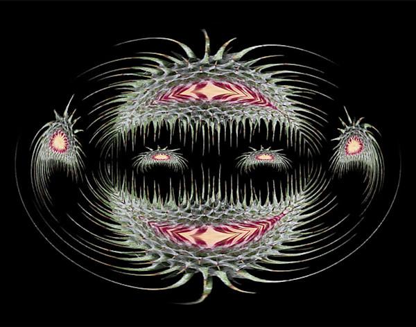 Wavy Thistle Face photograph for sale as fine art print