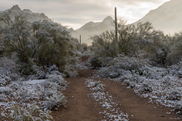 arizona, tucson, snow, winter, tucson mountian park