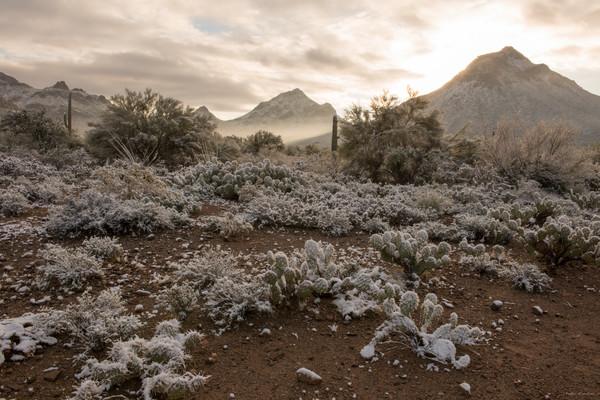 arizona, tucson, snow, winter, tucson mountian park