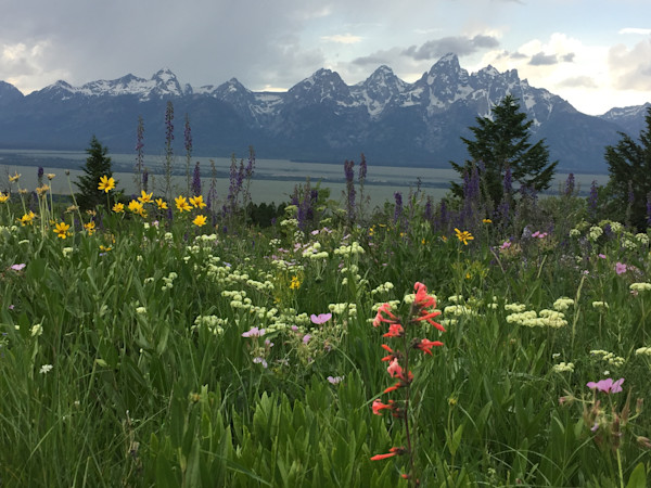 Wildflowers,mountains