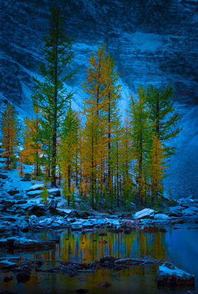 Trees of the Rockies Landscape – prints for sale. Banff