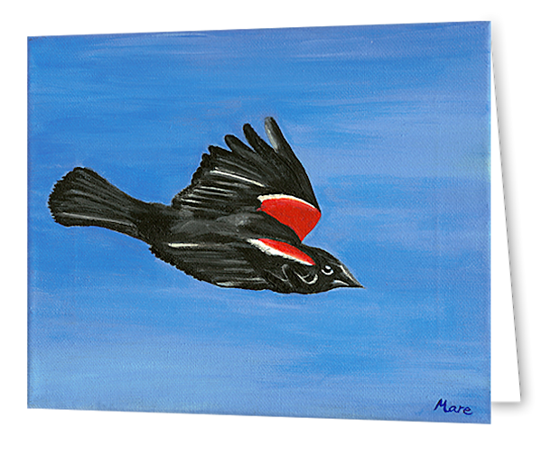 Greeting cards in an 8 pack set printed with original artwork of a red-winged blackbird by Mary Anne Hjelmfelt