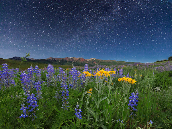Moonlight and Milky Way Over Mountain Wildflowers photograph for sale as fine art.