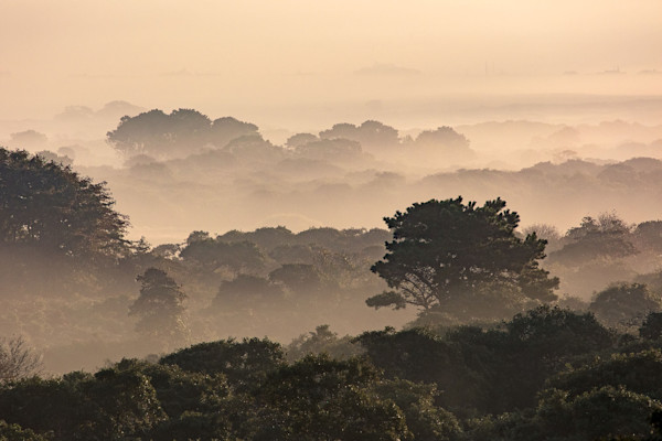 """Middle Moors Foggy Sunrise"" Nantucket Scenic Landscape Photography"