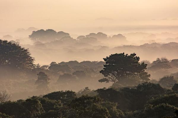 """Middle Moors Foggy Sunrise"" Nantucket Scenic Landscape Photography"