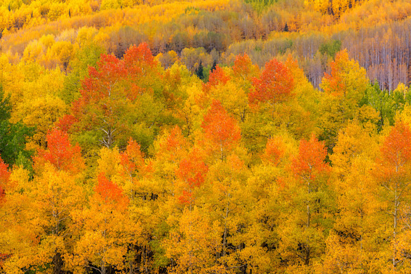 Colorado Fall Color Explosion fine art photograph by Mike Jensen
