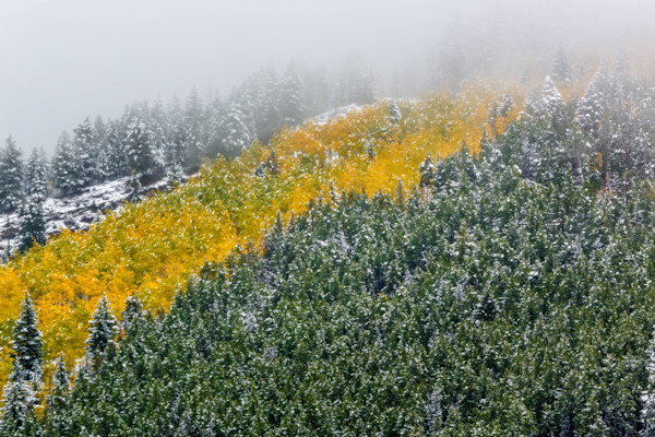 Snow On Aspen and Fir Trees fine art photograph by Mike Jensen