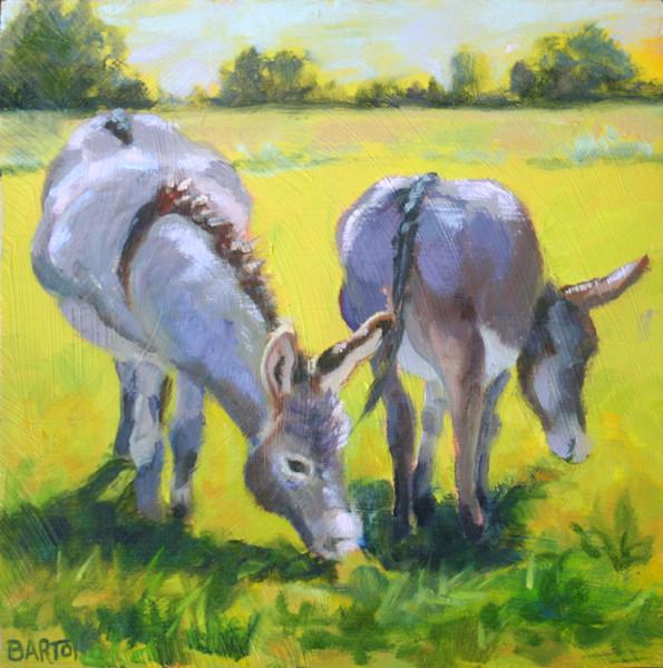 donkey, burro, grazing