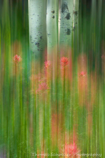 Impressionist Indian Paintbrush wildflower Fine Art photography prints/Montana Wildflower landscapes