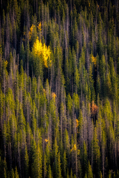 In The Midst Of The Forest fine art photograph by Mike Jensen