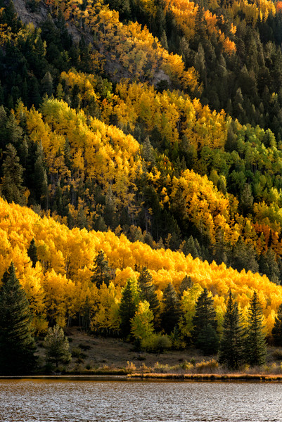 Rising Layers of Aspens