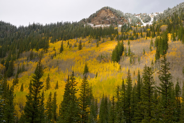 Fall Color on Guanella Pass Road