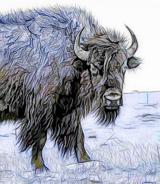 Art Photograph North American Bison v2 fleblanc