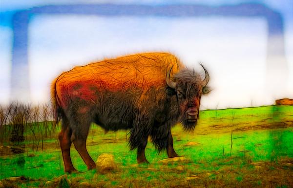 Art Photograph North American Bison v1 fleblanc