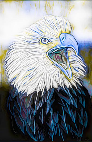 Art Photograph Bald Eagle Portrait v2 fleblanc