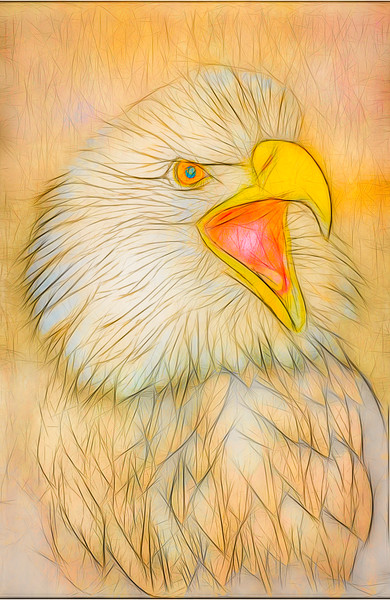Art Photograph Bald Eagle Portrait v1 fleblanc
