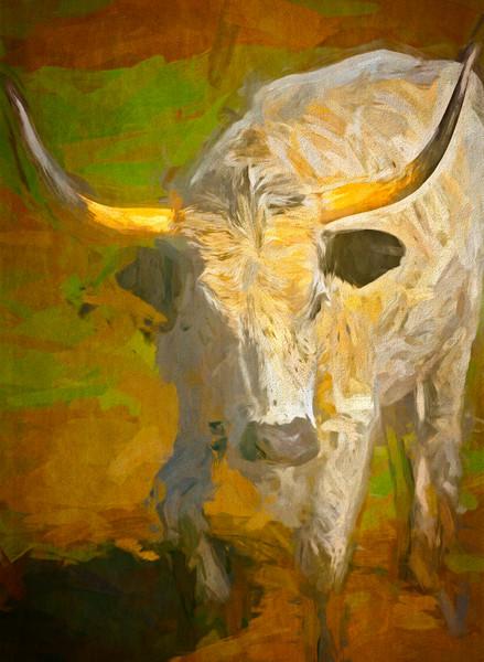 Art Photograph Texas Longhorn Challange v3 fleblanc