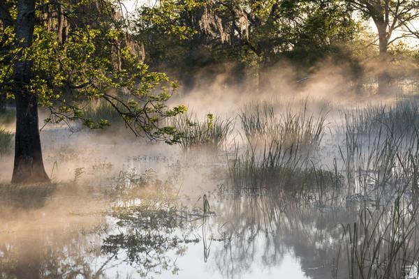 Fog on the Slough at Sunrise, Damon, Texas