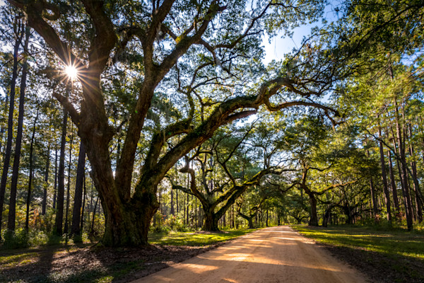 Lowcountry Oak Aveneue Photograph for Sale as Fine Art