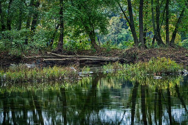 A Fine Art Photograph of Great Falls Reflection Along the C & O Canal by Michael Pucciarelli