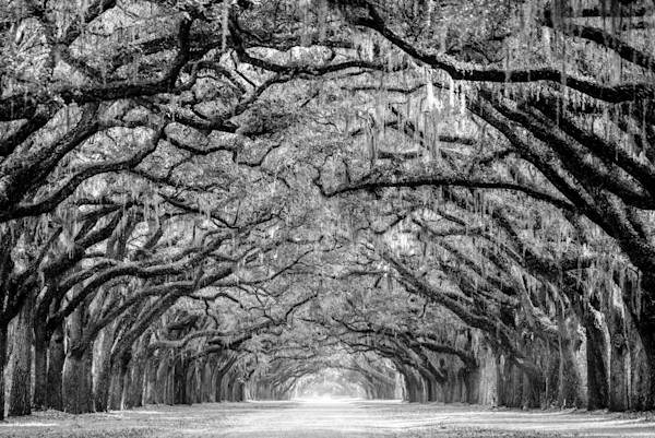 Wormsloe in Black and White Photograph for Sale as Fine Art